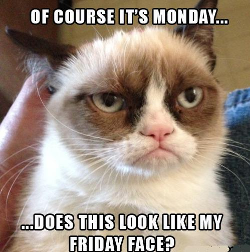 monday-pictures-cat-expression